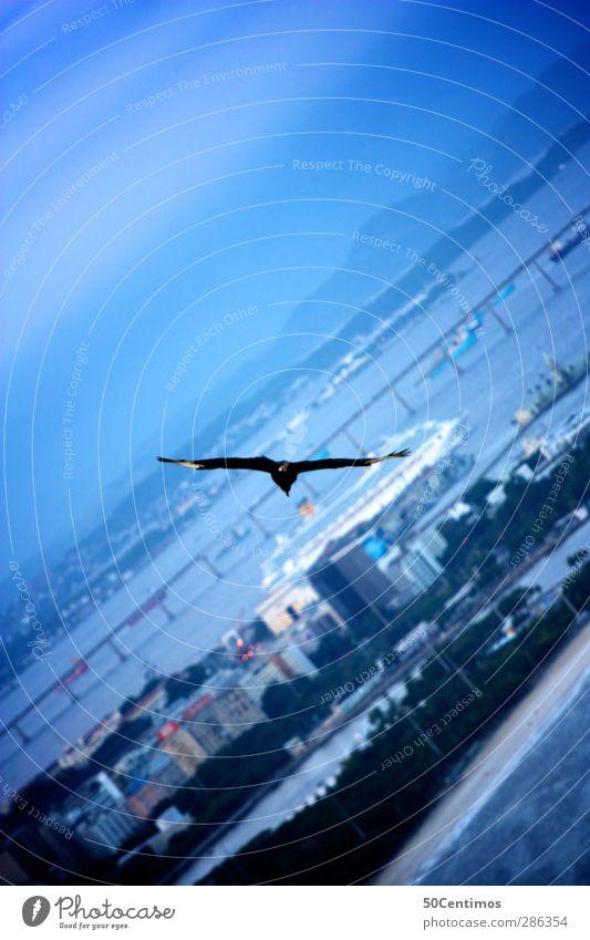 Fly over Rio de Janeiro Südamerika Aussenaufnahme starke Tiefenschärfe Wolken Pflanzen Vogelperspektive Urlaub Freiheit Abenddämmerung blau Stadt Meer Wasser