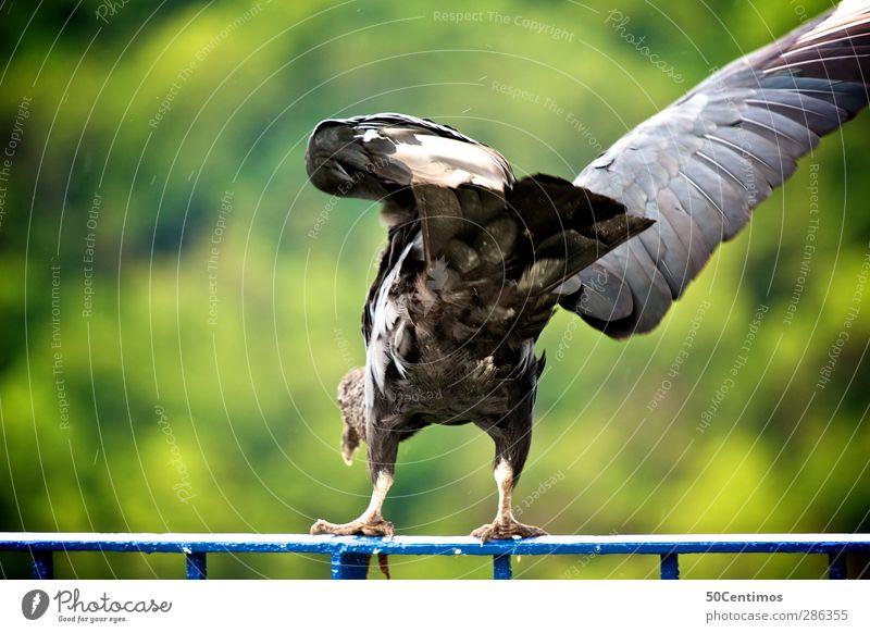 Der Start eines Adlers