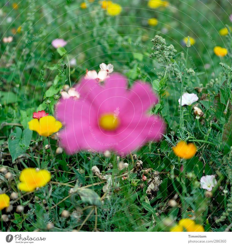 Qual! | Schüchtern + im Fokus. Natur grün weiß Pflanze Umwelt Wiese Gefühle Blüte rosa stehen einfach Blühend Irritation