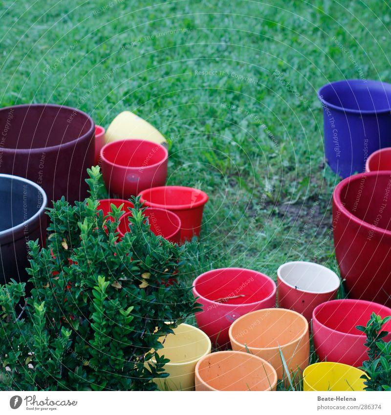 'Qual! | die Qual der Wahl ... Garten Blumentopf Stein gebrauchen blau mehrfarbig gelb orange rot schön umtopfen umpflanzen verschönern Farbvariation Farbfoto