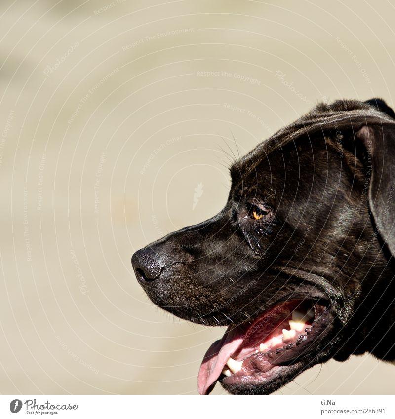 Qual   gerettet Hund weiß Tier schwarz grau braun warten beobachten Freundlichkeit Haustier atmen Tierliebe muskulös