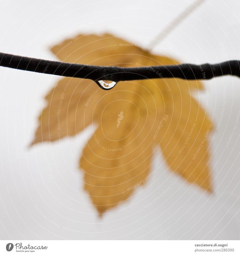 the leaf in the drop Pflanze Einsamkeit Blatt ruhig gelb Herbst grau Traurigkeit klein Zufriedenheit Nebel nass Perspektive Wassertropfen Pause einfach