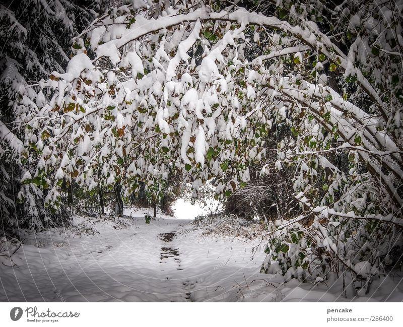 Qual! | belastungsprobe Natur weiß Pflanze Baum Landschaft Winter Wald Schnee Wege & Pfade außergewöhnlich Schneefall Sträucher Urelemente bedrohlich Tor
