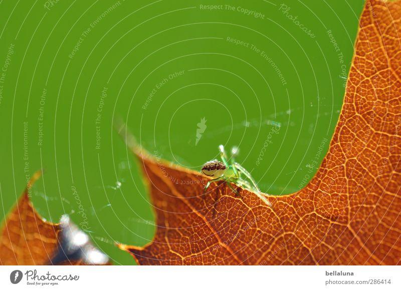Qual... | ...itätsarbeit Natur Pflanze Tier Sonnenlicht Wetter Schönes Wetter Gras Blatt Garten Park Wiese Wald Wildtier Spinne 1 krabbeln sitzen braun grün