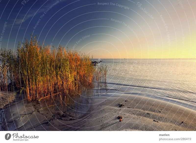ex oriente lux Landschaft Pflanze Sand Wasser Himmel Wolkenloser Himmel Sonnenlicht Herbst Klima Wetter Schönes Wetter Schilfrohr Küste Strand Meer blau braun