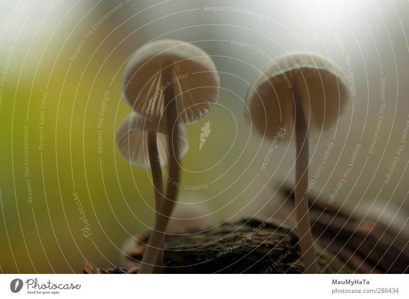 Pilze Natur Pflanze Frühling Sommer Herbst Klima Nebel Regen Baum Garten Park Feld Wald chaotisch elegant exotisch Freiheit Macht Risiko Farbfoto Außenaufnahme