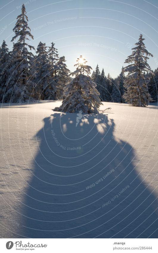 Erleuchtung Natur schön Sonne Baum Landschaft Winter Wald kalt Umwelt Idylle Schönes Wetter Vergänglichkeit Stern (Symbol) Zeichen Wolkenloser Himmel