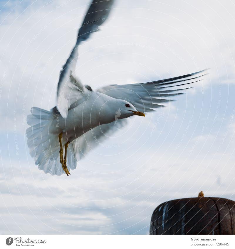 Anflug Leben Ferien & Urlaub & Reisen Himmel Wolken Meer Tier Wildtier Vogel 1 Bewegung fliegen Freundlichkeit blau weiß ästhetisch elegant Freiheit Neugier
