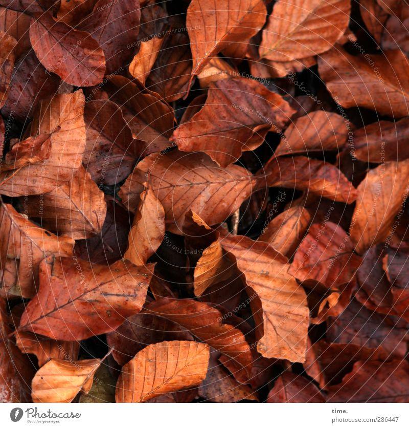 sch.sch.sch...... Umwelt Natur Pflanze Herbst Wildpflanze Herbstlaub Blatt Wald authentisch nachhaltig natürlich Originalität wild braun Zufriedenheit