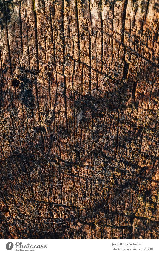 Holztextur Baum Hintergrundbild Frühling Garten braun Baumstamm Baumrinde