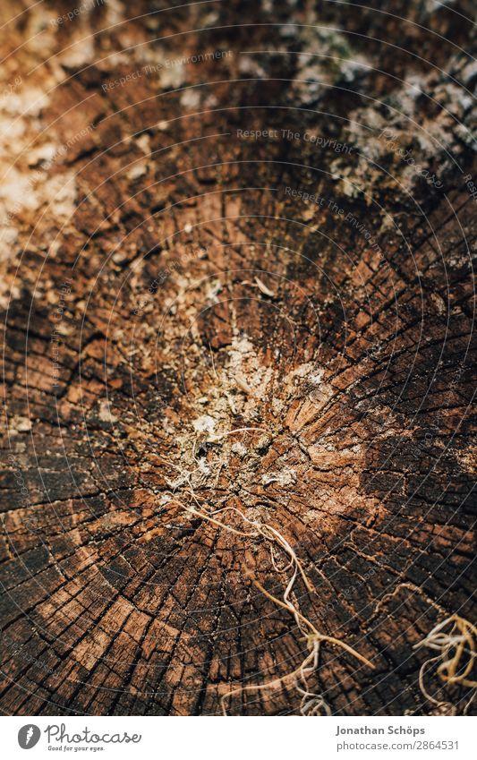 Holztextur Garten Frühling Baum braun Hintergrundbild Baumstamm Baumrinde Strukturen & Formen Außenaufnahme Nahaufnahme Detailaufnahme Makroaufnahme