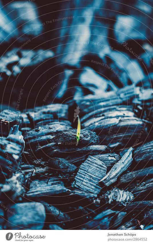 Neuanfang – Asche Nahaufnahme mit einem grünen Grashalm Garten Erneuerbare Energie Frühling Holz blau schwarz Brennstoff Kohle brennen kohleausstieg Feuerstelle