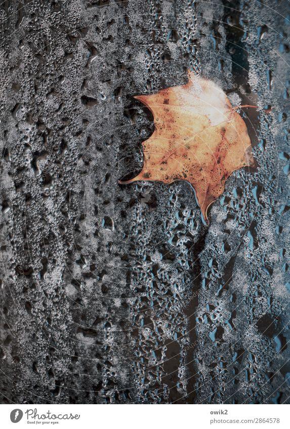 Dürres Blättlein auf nassem Grunde Natur Pflanze Wasser Blatt ruhig Herbst Umwelt Traurigkeit Tod liegen Wassertropfen Vergänglichkeit Vergangenheit Hoffnung