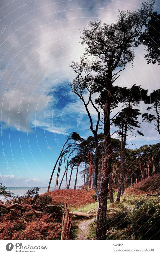 Nordic Erholing Umwelt Natur Landschaft Pflanze Himmel Wolken Horizont Herbst Schönes Wetter Wind Baum Sträucher Wildpflanze Windflüchter Wald Küste Ostsee