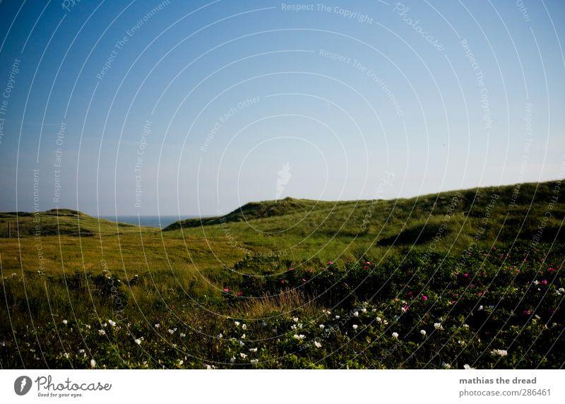 IDYLL Umwelt Natur Landschaft Wolkenloser Himmel Horizont Sommer Schönes Wetter Pflanze Gras Moos Küste Duft schön Meer Blüte uneben grün Idylle ruhig Farbfoto