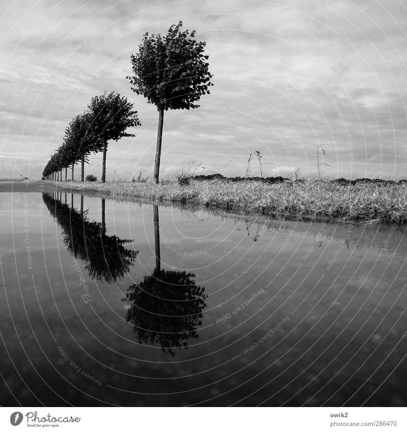 Wassergrundstück Umwelt Natur Landschaft Pflanze Himmel Wolken Horizont Klima Wetter Schönes Wetter Baum Gras stehen Wachstum Reflexion & Spiegelung Reihe