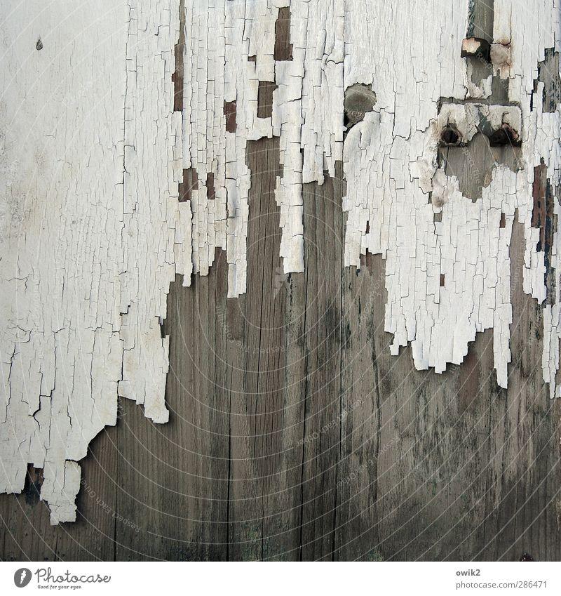 Befreiungsversuch Holz alt trist grau weiß Vergänglichkeit Farbstoff Zahn der Zeit verfallen Farbfoto Gedeckte Farben Außenaufnahme Nahaufnahme Detailaufnahme