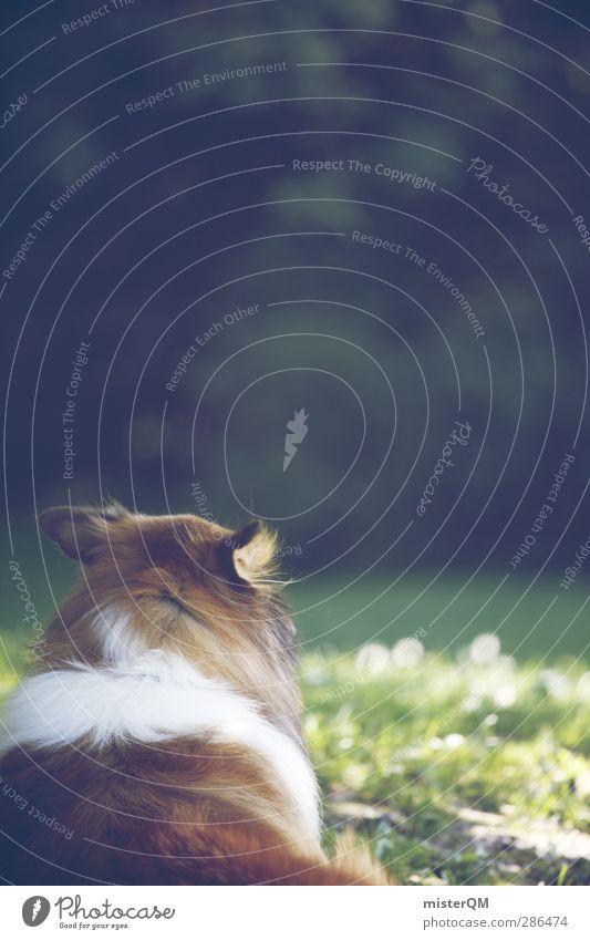 Green Weekend I Umwelt Natur Landschaft Tier Haustier Hund ästhetisch Hundekopf Hundeblick Farbfoto Gedeckte Farben Außenaufnahme Experiment Menschenleer