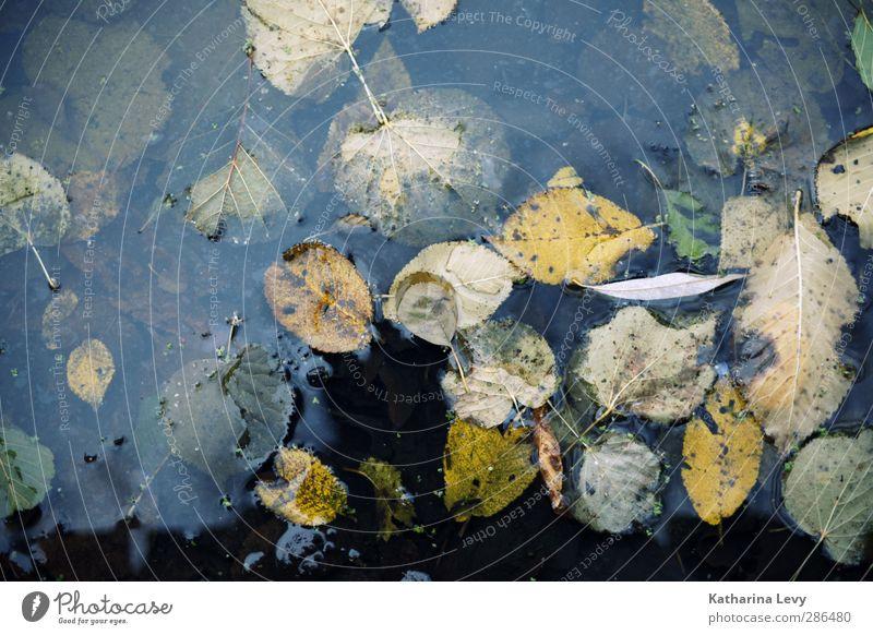 echtes Schietwetter Natur Urelemente Wasser Herbst Blatt Moor Sumpf Teich dunkel kalt nass trist blau gelb Umweltschutz Verfall Vergänglichkeit regenerativ
