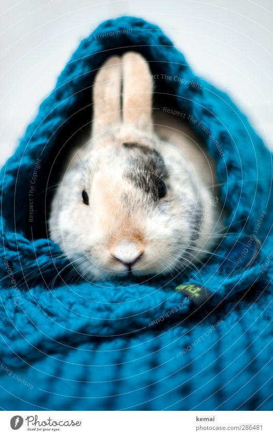Una Hase Tier ruhig Wärme sitzen Warmherzigkeit Ostern Fell Tiergesicht Haustier Hase & Kaninchen gemütlich Knöpfe kuschlig Schal Accessoire Tierliebe