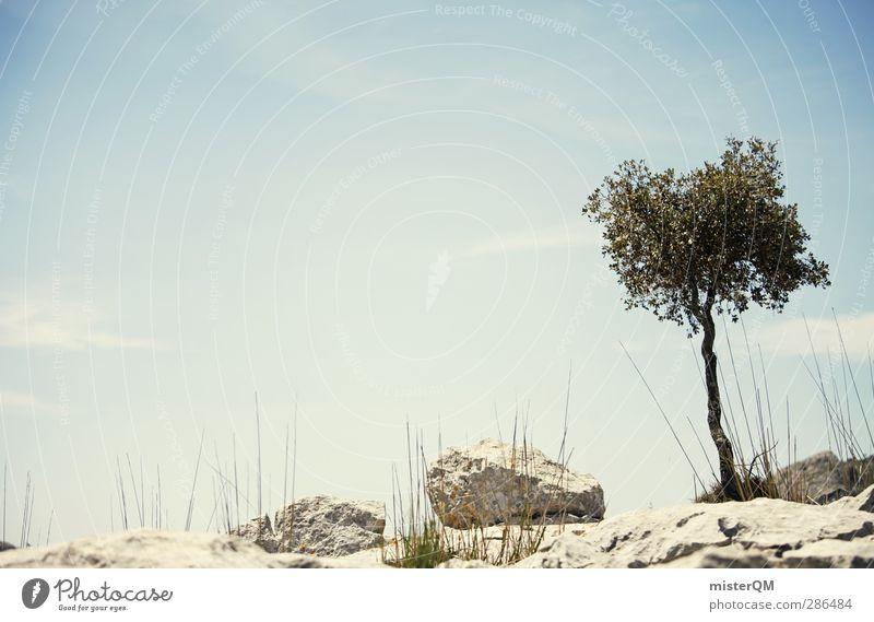 Some Alone Time. Natur Ferien & Urlaub & Reisen Baum Einsamkeit ruhig Landschaft Umwelt Berge u. Gebirge Wachstum ästhetisch Wüste Spanien abgelegen Mallorca mediterran Überleben