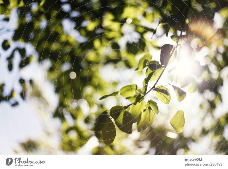 Green Bokeh. Natur grün Sommer Blatt ruhig Landschaft Erholung Umwelt Wärme Idylle ästhetisch Grünpflanze Lichtspiel Lichtstrahl Lichtschein Lichteinfall