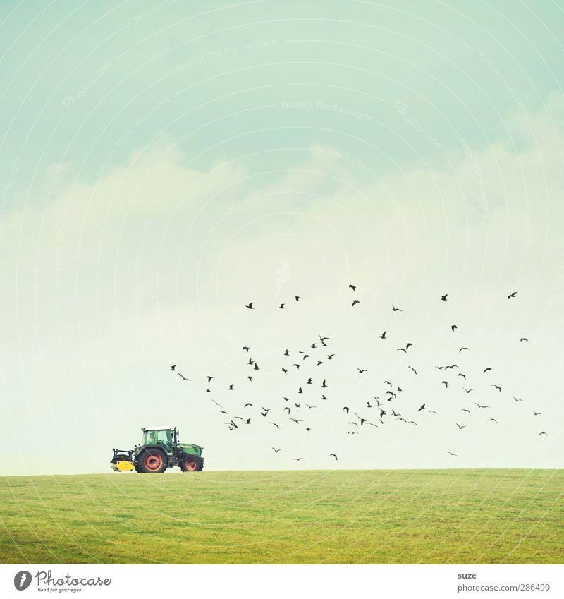 Die Zeit vergeht wie im Flug ... Himmel Natur blau grün Sommer Landschaft Umwelt Wiese klein Horizont Vogel Arbeit & Erwerbstätigkeit natürlich Feld Wildtier authentisch
