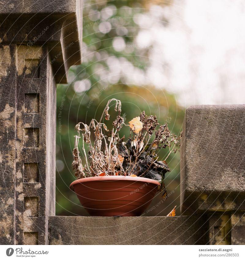 forgotten Natur alt Pflanze Einsamkeit dunkel Wand Herbst Tod Gefühle Traurigkeit Mauer braun Dekoration & Verzierung kaputt trist Vergänglichkeit