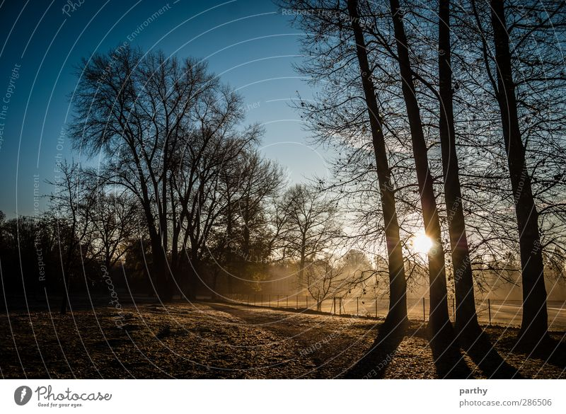 Fields of Fog Winter Natur Herbst Schönes Wetter Nebel Eis Frost Baum Park Wiese Wald kalt blau braun gelb Farbfoto Außenaufnahme Morgen Licht Schatten Kontrast