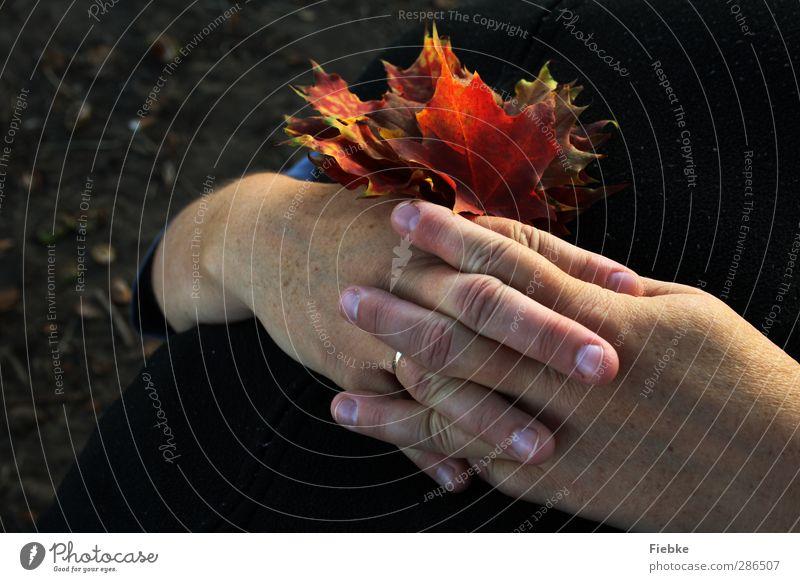 Herbststille Frau Natur Hand Farbe Einsamkeit Blatt ruhig Erwachsene Umwelt Tod Traurigkeit träumen Zufriedenheit Finger Vergänglichkeit