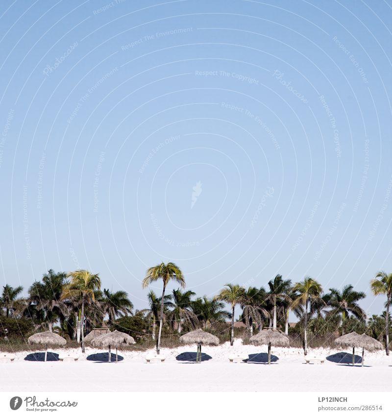 Sunshine State. II Himmel Ferien & Urlaub & Reisen Sommer Meer Strand ruhig Ferne Sand hell Zufriedenheit Tourismus USA heiß Sonnenbad Sommerurlaub Palme