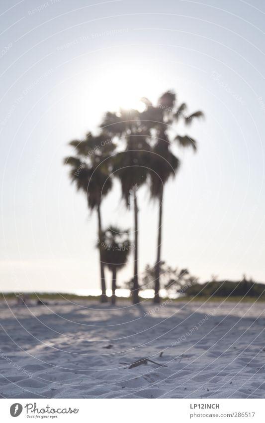 Sombrero-Beach. III Ferien & Urlaub & Reisen Tourismus Ferne Sommer Sommerurlaub Strand Meer Umwelt Natur Landschaft Tier Sand Sonne Schönes Wetter Baum