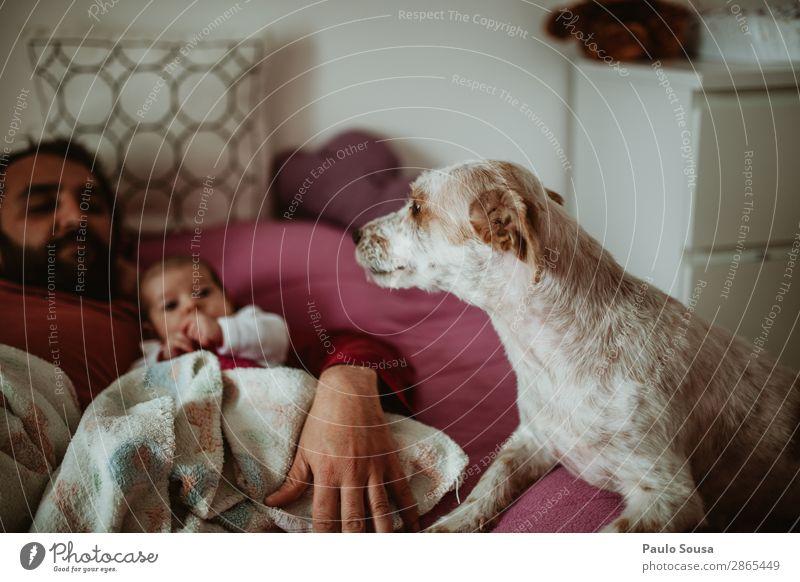 Vater, Baby und Hund Lifestyle Mensch Kind Kleinkind Erwachsene Familie & Verwandtschaft 2 0-12 Monate 18-30 Jahre Jugendliche Haustier Tier genießen