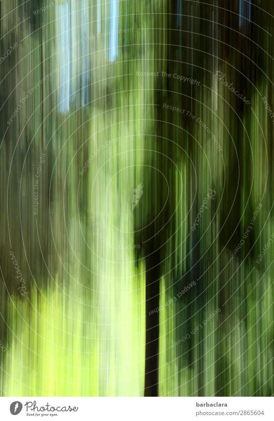 Schwarzwald im Frühling, abstrakt Himmel Baum Wald hoch grün Stimmung Klima Natur Umwelt Farbfoto Außenaufnahme Detailaufnahme Experiment Muster