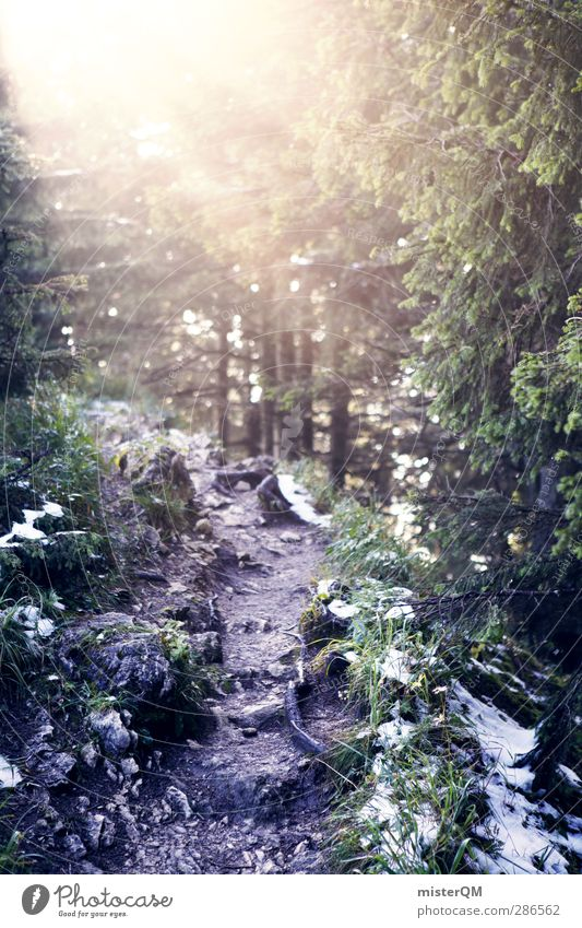 Lichtung. Natur Winter Wald Umwelt dunkel Wärme kalt Wege & Pfade Beleuchtung Schneefall Nebel wandern Warmherzigkeit ästhetisch geheimnisvoll Fußweg
