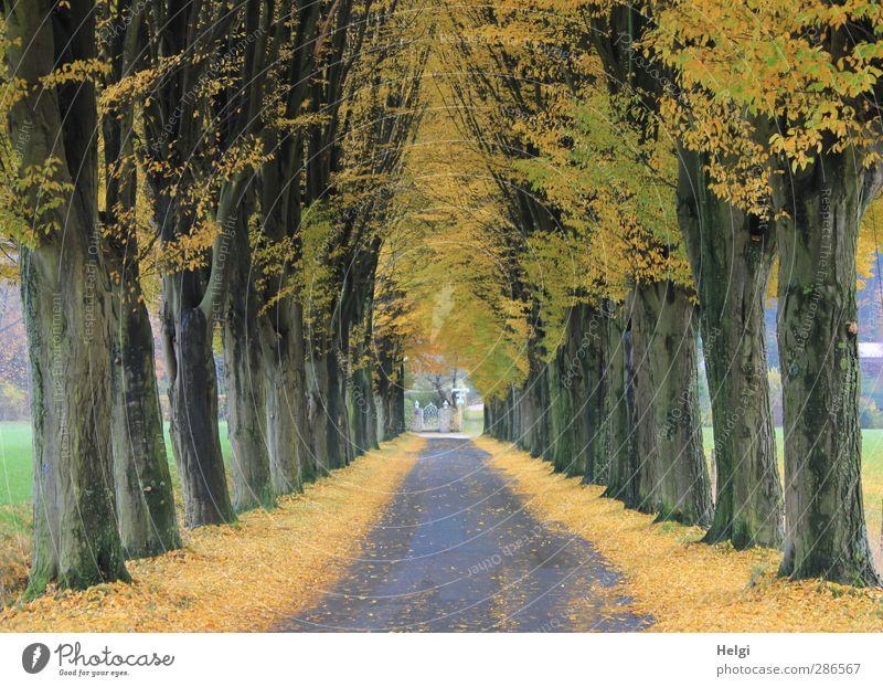 Tunnelblick... Natur grün Pflanze Baum Einsamkeit Blatt ruhig Landschaft gelb Umwelt Straße Herbst grau braun natürlich authentisch