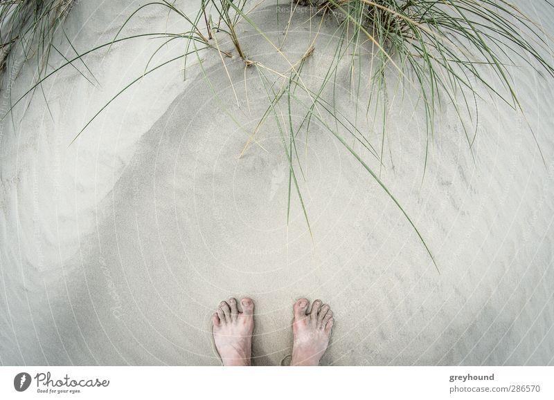 ZehenSand Ferien & Urlaub & Reisen Sommer Pflanze Meer Strand Erholung Umwelt Wärme Spielen Frühling Küste Sand Fuß Schwimmen & Baden Wellen Tourismus