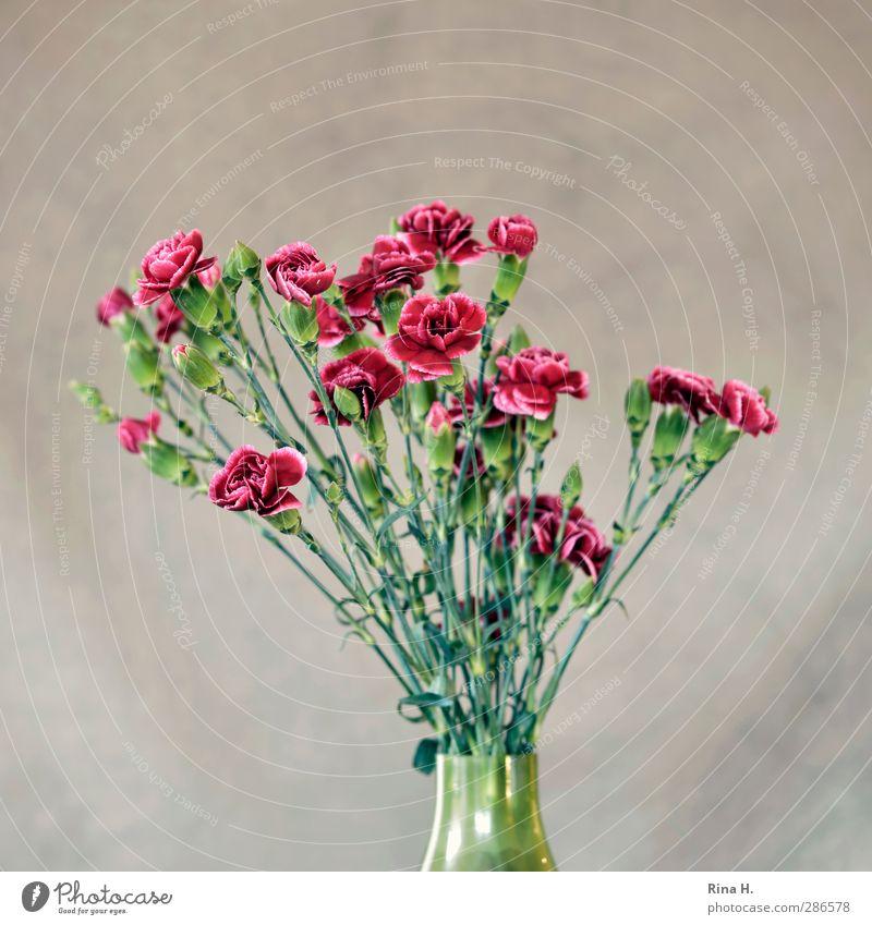 Blumenvase mit Nelken grün rot Blüte Häusliches Leben Blühend Blumenstrauß Vase Nelkengewächse