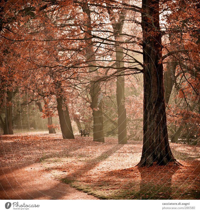 take a walk Natur Pflanze Farbe Baum Einsamkeit Landschaft ruhig Wärme Leben Herbst Stimmung Park orange träumen Romantik Schönes Wetter