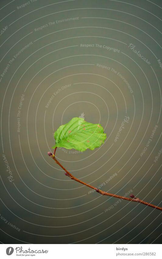 Am Ende ein Optimist !? Natur Wasser grün Pflanze Einsamkeit Blatt Herbst authentisch elegant leuchten ästhetisch einzeln Wandel & Veränderung Ast
