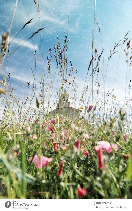 Schiefe Schapelle blau schön grün Blume Landschaft Umwelt Architektur Gras Blüte Frühling Gebäude Glück Religion & Glaube rosa Fassade Wachstum
