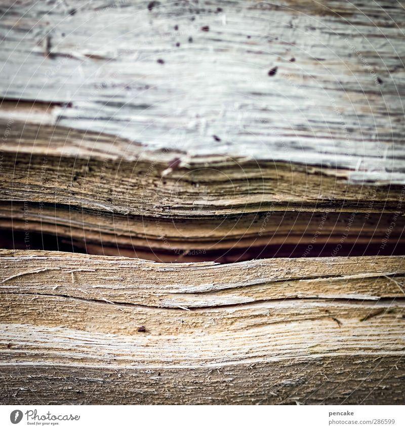 hölzernes lächeln Holz Lächeln Holzstruktur Spalte Schlitz Riss Splitter trocken Lippen Farbfoto Außenaufnahme