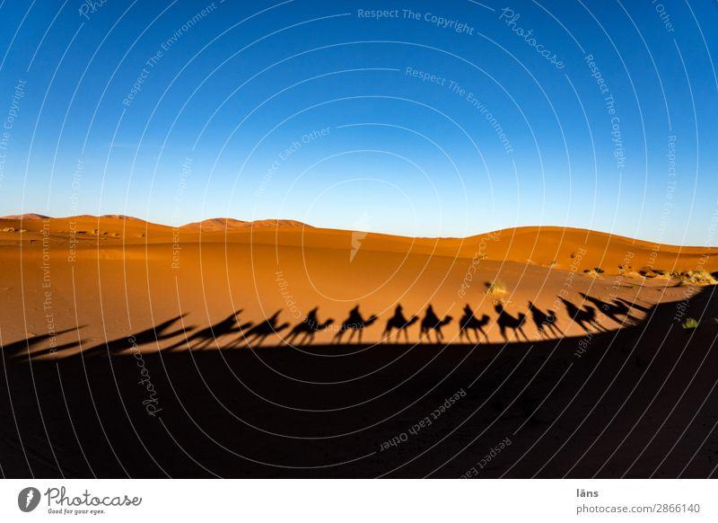 Die Karawane zieht weiter - 1300 Mensch Himmel Ferien & Urlaub & Reisen Landschaft Tier Ferne Wege & Pfade Bewegung Tourismus außergewöhnlich Menschengruppe