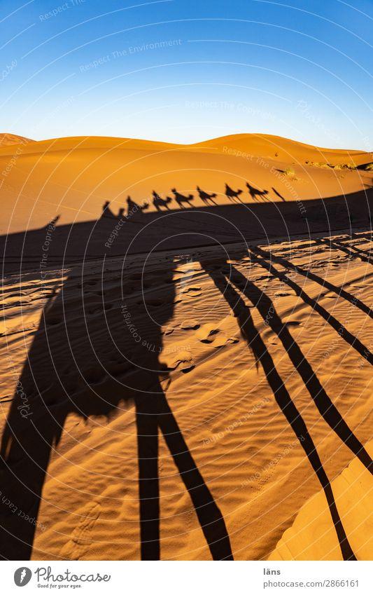 Karawane lV Mensch Leben Menschengruppe Umwelt Himmel Schönes Wetter Wüste Sahara Marokko Afrika Nutztier Dromedar Kamel Tiergruppe Bewegung gehen tragen