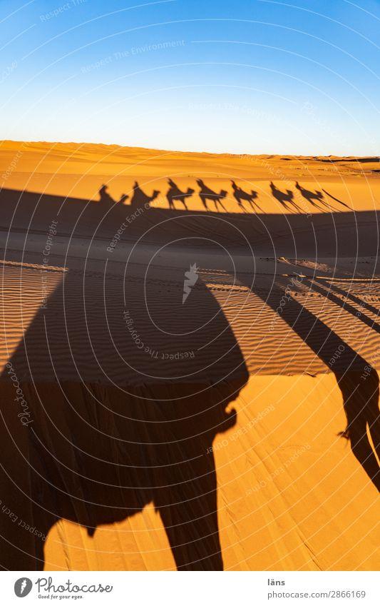 Karawane ll Marokko Kamel Dromedar Wüste Sand Sahara