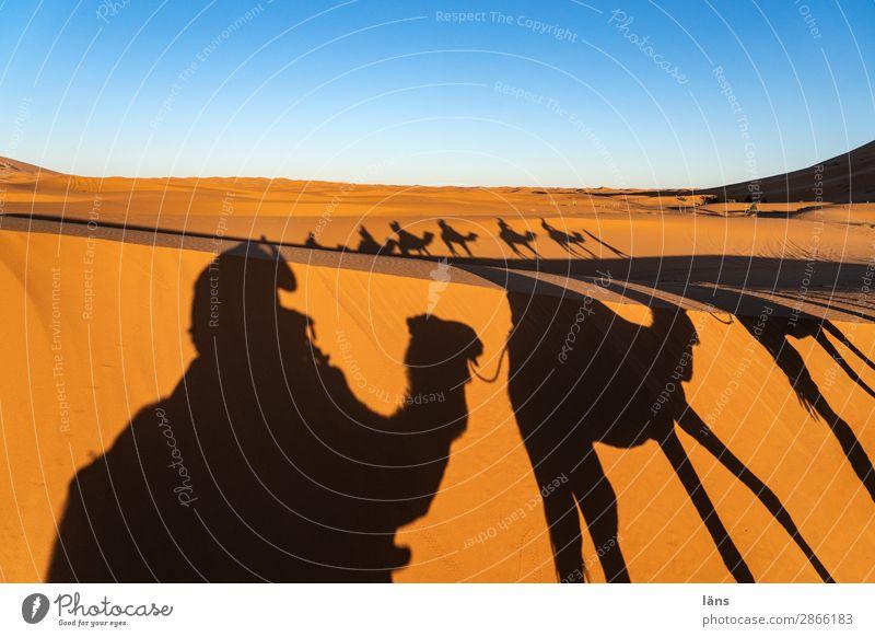 Karawane Vll Wüste Kamel Dromedar Sahara Marokko Sand Schatten
