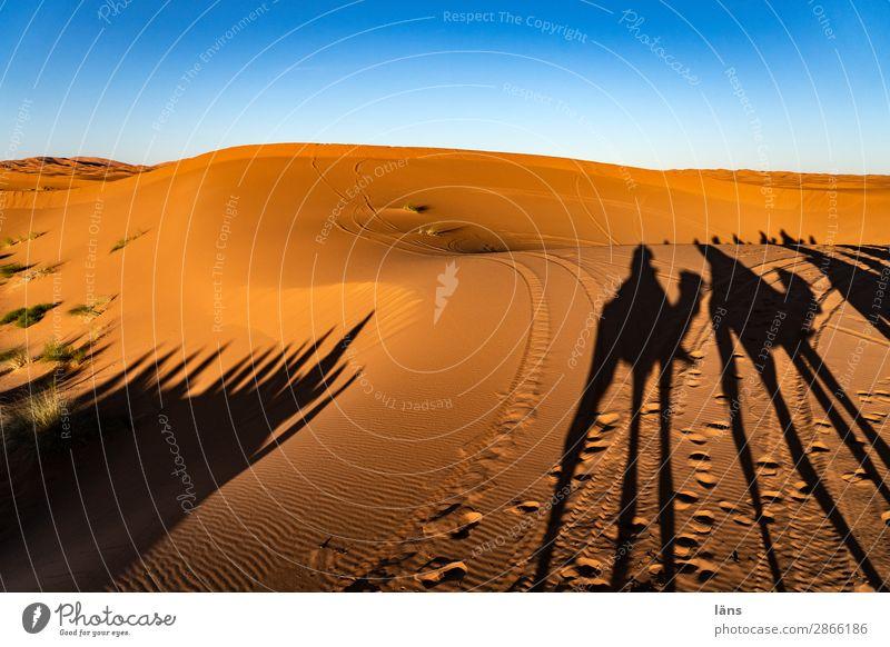 Karawane V Sahara Wüste Sand Sonne Sonnenuntergang Schatten Kamel Dromedar
