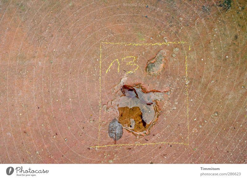 13 - was auch immer. Wasser Blatt gelb Stein braun Zufriedenheit warten einfach Ziffern & Zahlen eckig 13