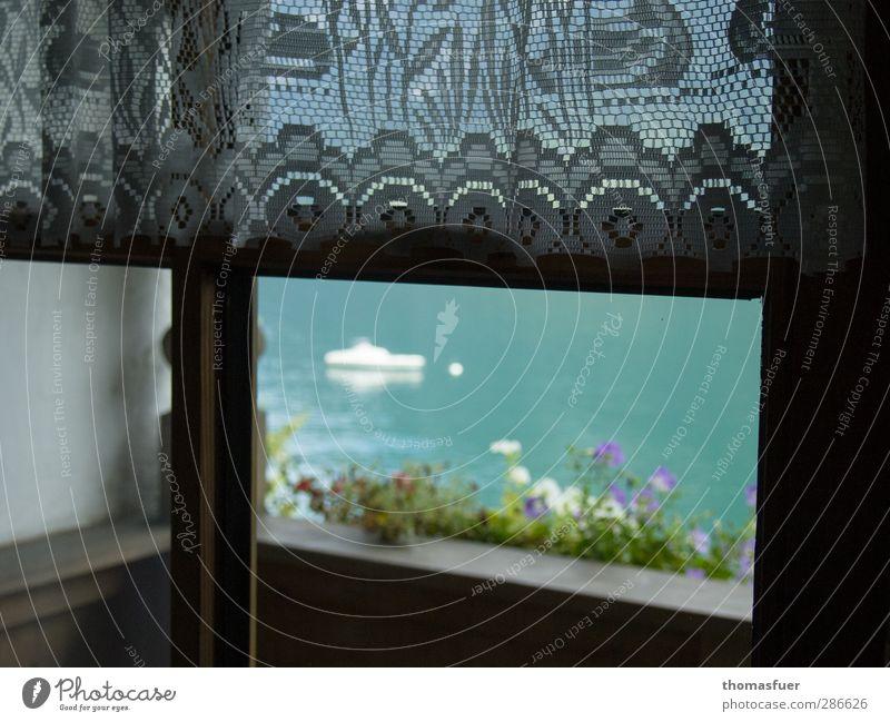 am Fenster schlechtes Wetter Blume Blüte Topfpflanze See Balkon Sportboot Segelboot Gardine Kitsch türkis Sicherheit Geborgenheit Einsamkeit Erwartung