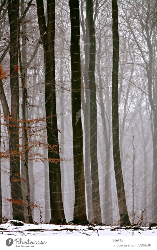 Winterwald Natur Baum ruhig Wald kalt Schnee Stimmung Nebel Schneelandschaft Zweige u. Äste rieseln Waldrand Winterstimmung Nebelschleier